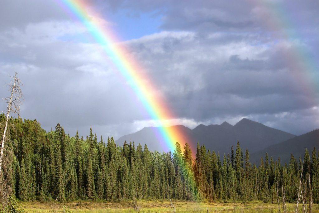 森にかかる虹の画像