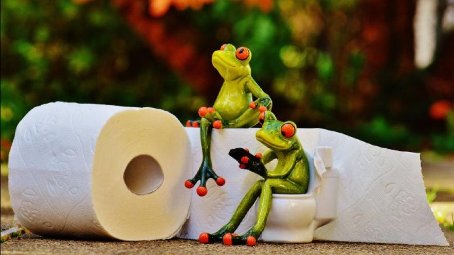 トイレットペーパーの上に座るカエル