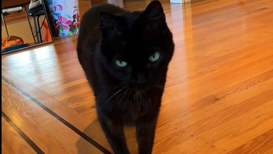 黒猫のLucy