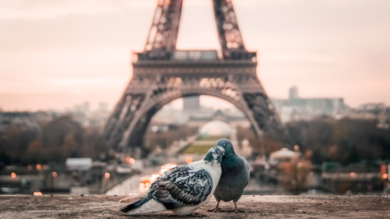 寄り添いあう鳩