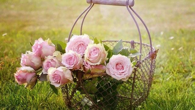 カゴに入ったピンクの薔薇
